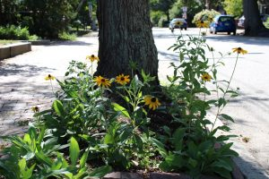 Hellstrip Plantings: Creating Habitat in the Space Between the Sidewalk and the Curb