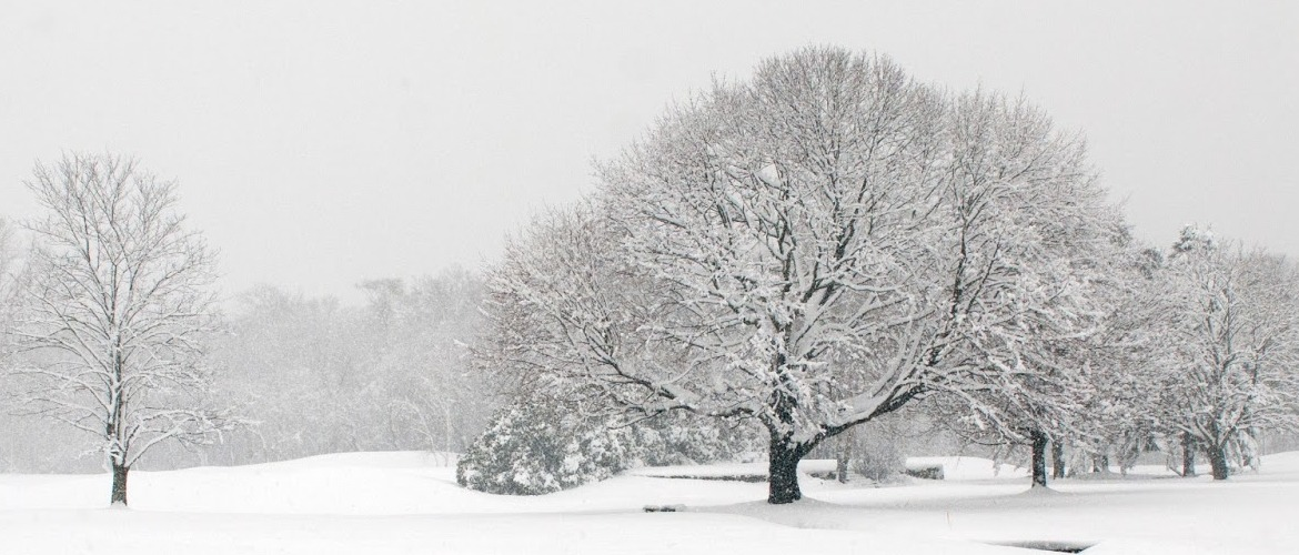 Snowy winter trees, for The Resilient Activist