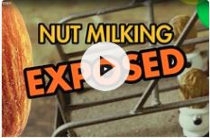 Humor #3: Nut Milk Stories