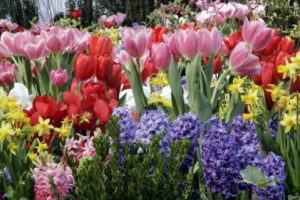 Read more about the article EnviroTip #6: Fall Bulb Prep & Early Pollinators