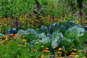 Permaculture Paradigm for the Next Economy