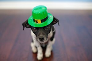Great Ways to Go Green on St. Patrick's Day
